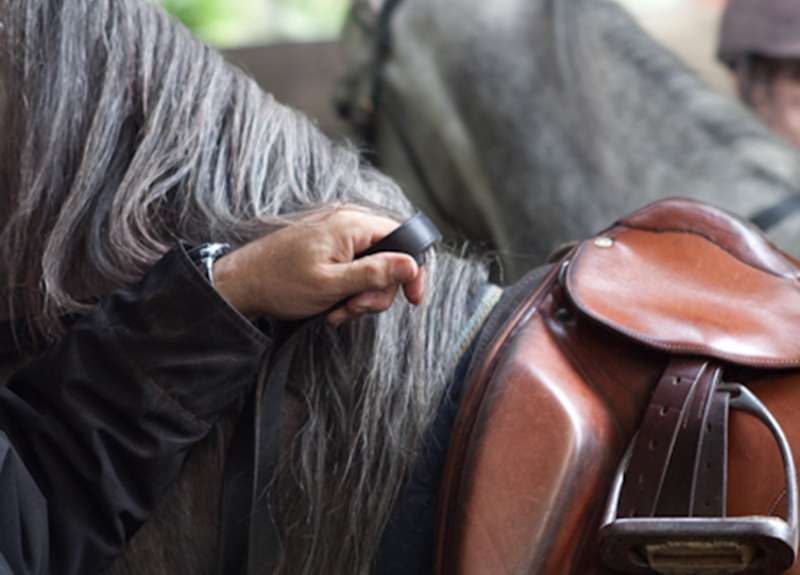 The riders hand is the most sensitive part of us. The horse's mouth the most sensitive part of him. A rider educated this way listens with the rein to the horse, and moves with him as breath of his breath.